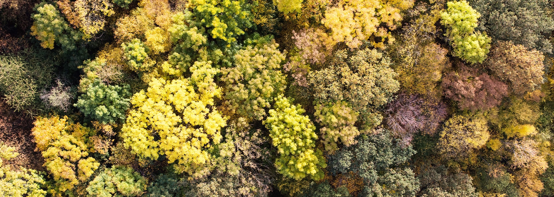 overhead view of dense forest