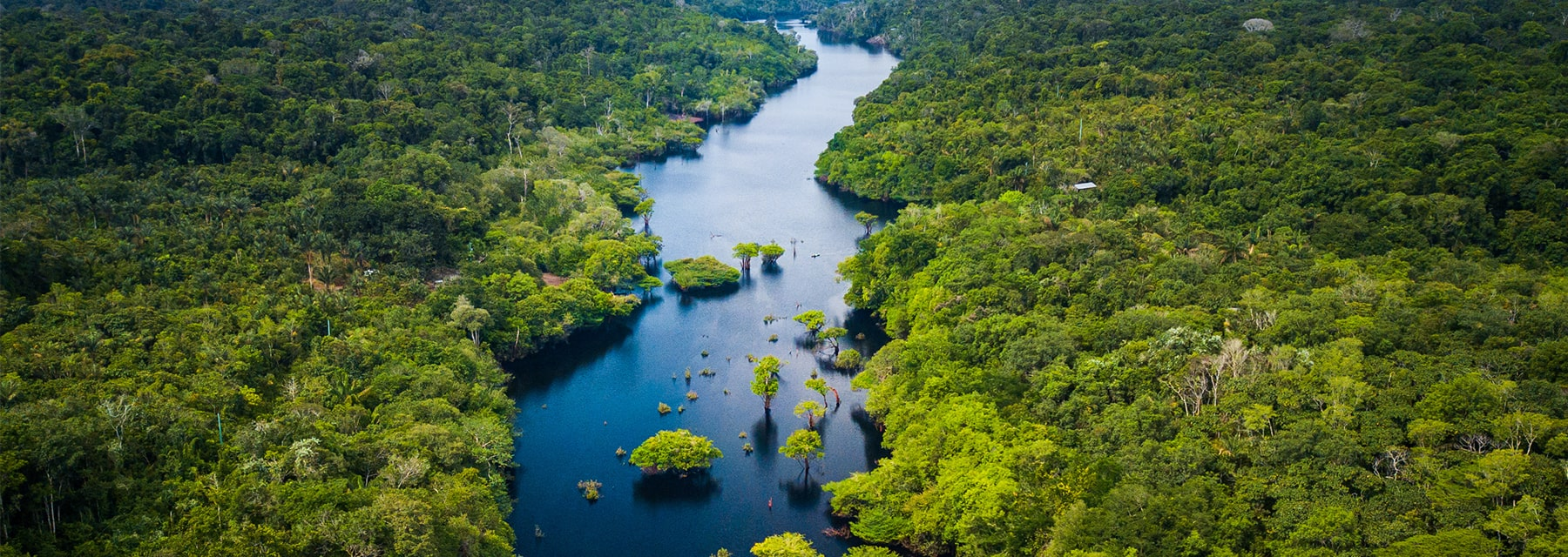 view of rainforest with river