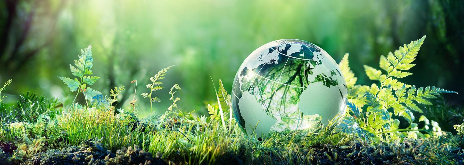 glass globe laid on grass